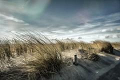 Gedonder in de duinen