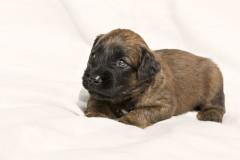 Puppy's 4