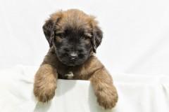 Puppy's 5