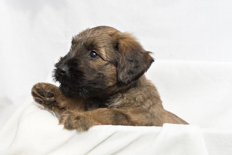 Puppy's 6