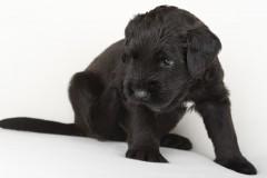 Puppy's 1
