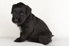Puppy's 2