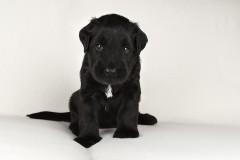 Puppy's 3
